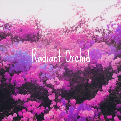 radiant orchid opener